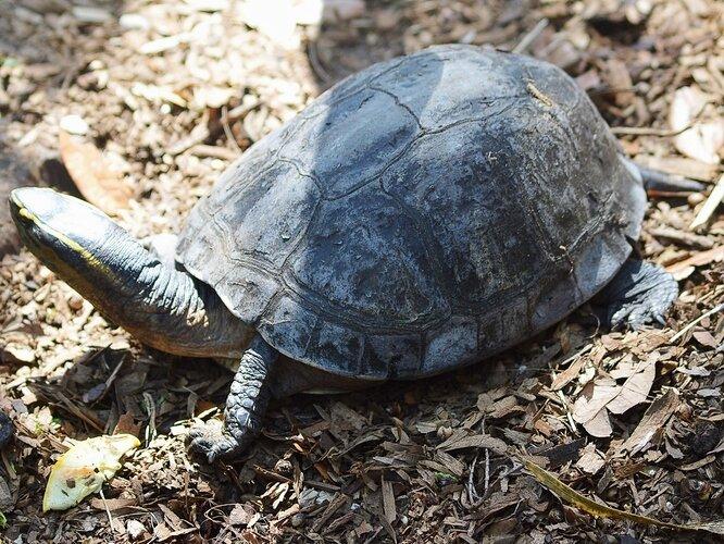StAugustine_AlligatorFarm_TurtlesandTort07