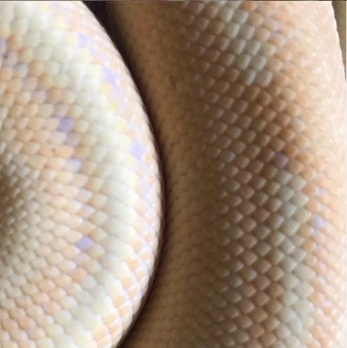 Screenshot_2020-07-25 Jenn Roberts ( highdesertherps) • Instagram photos and videos(2)