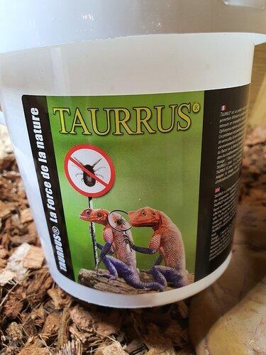 tarrus1