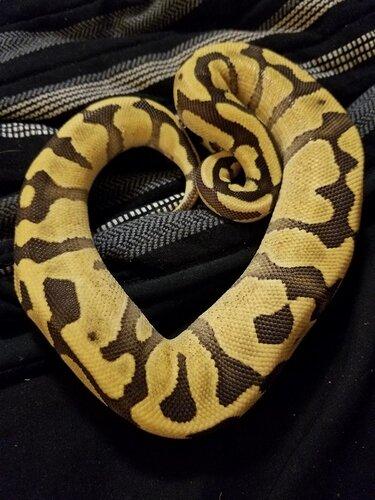 boop_n_snoots_reptiles