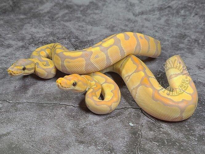 BananaBananaClown