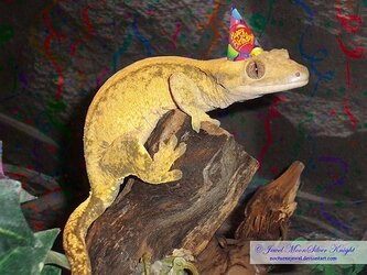 birthday_gecko_by_heather_chrysalis_d56tfdr-fullview