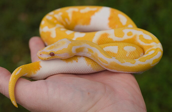 Oct 25 2021 Pastel Dreamsicle Male  3