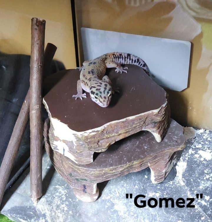 Gomez1