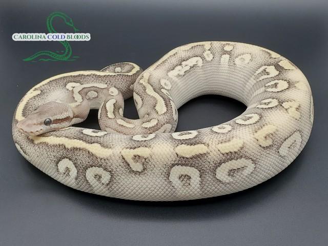 peters6156
