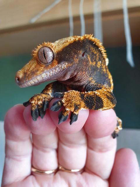 lizardsden
