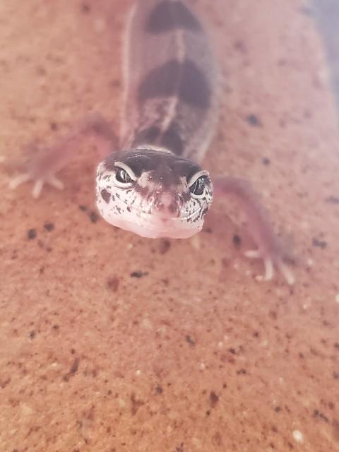silver_reptiles